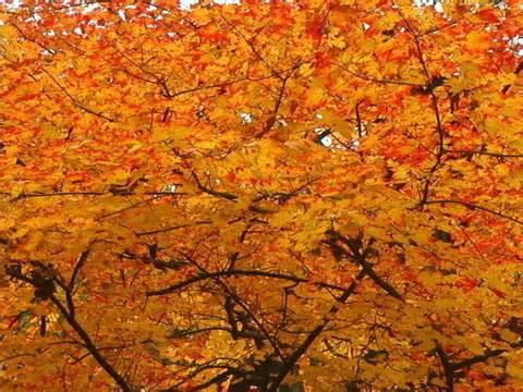 boasting immune system in autumn
