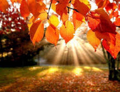 Three Tips for Autumn Wellbeing