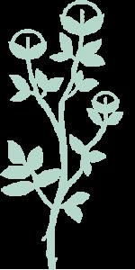 kundalini house plant