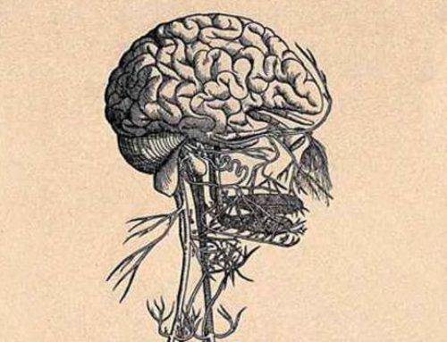 How to Stimulate Your Vagus Nerve for Better Mental Health